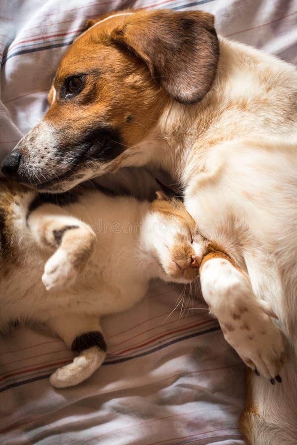 在床上的狗和猫拥抱 库存图片