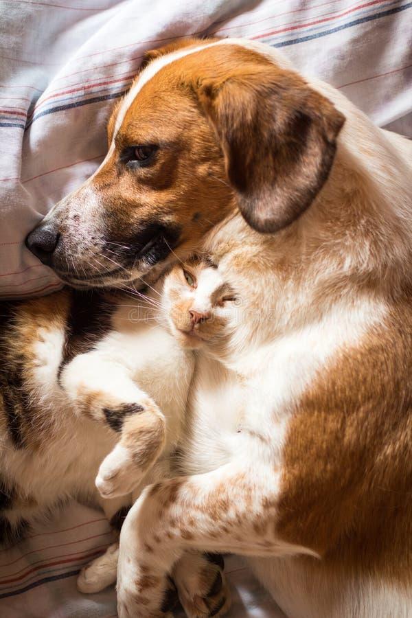 在床上的狗和猫拥抱 库存照片
