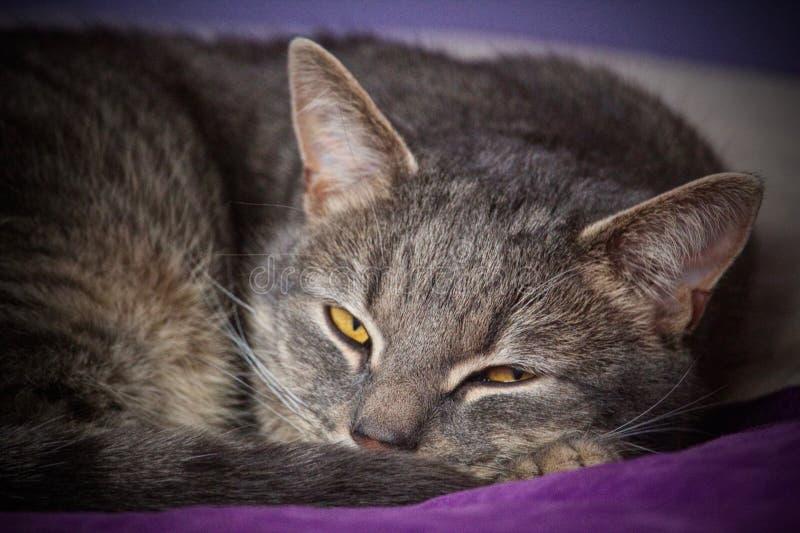 在床上的睡觉猫 库存图片