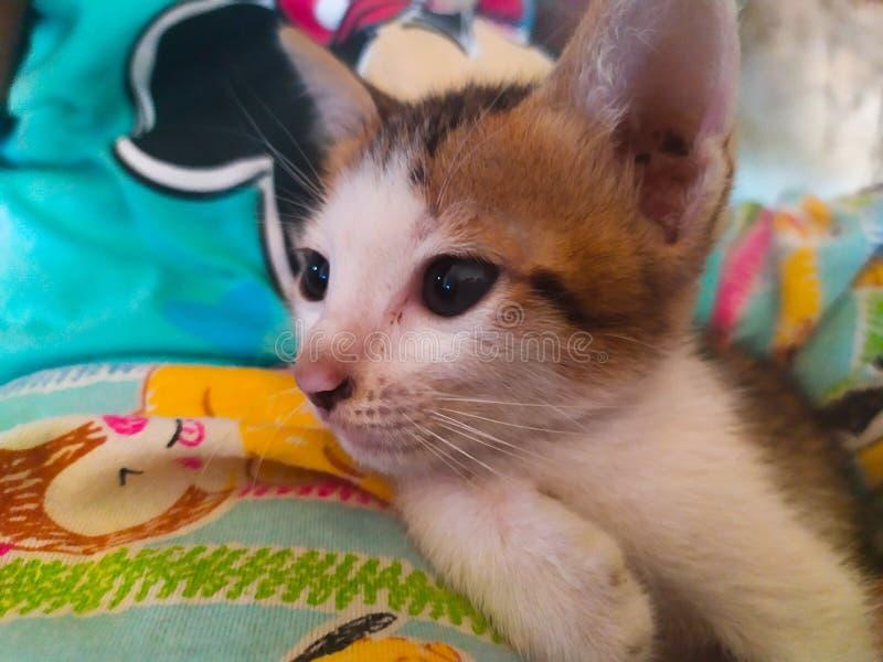 在床上的逗人喜爱的小猫 免版税库存图片