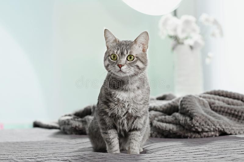 在床上的逗人喜爱的滑稽的猫 图库摄影