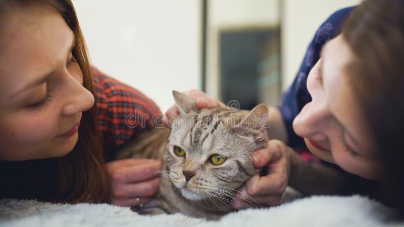 在床拥抱肥胖恼怒的猫的两个愉快的妇女朋友特写镜头和获得在床上的乐趣 库存照片