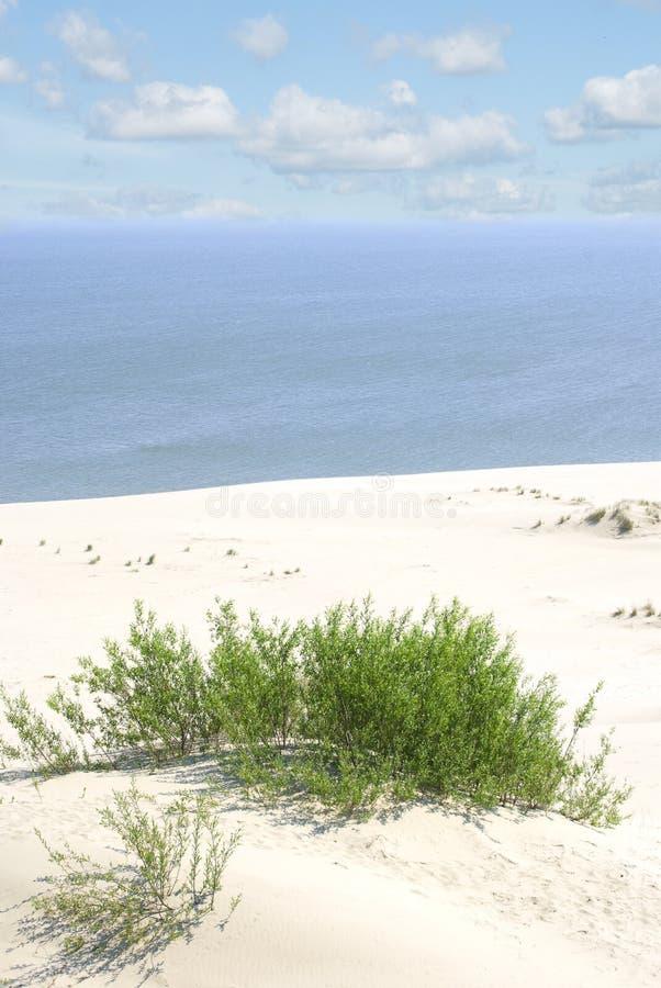 Download 在库尔斯沙嘴,俄罗斯的白色沙丘 库存照片. 图片 包括有 区域, 谷物, 天空, 沙子, 沙丘, 小山, 国家 - 72366860