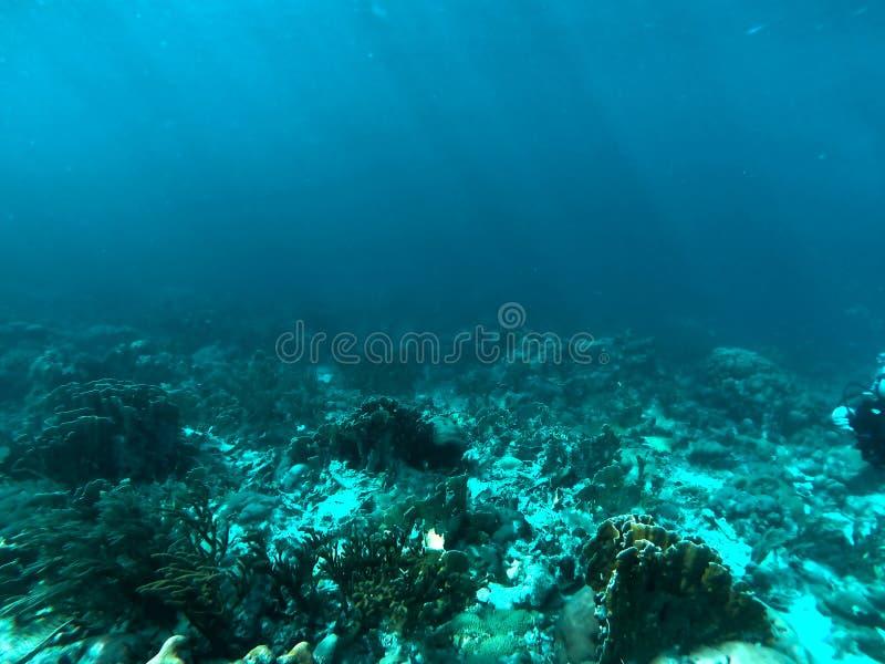 在库拉索岛的岩石的水下的阳光 免版税库存照片