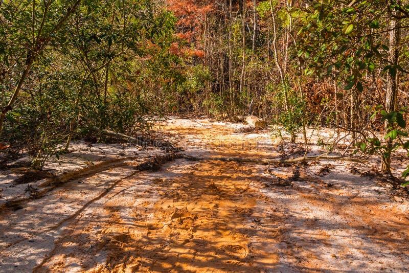 在底层沃土的小径和丛林上帝峡谷,美国 图库摄影