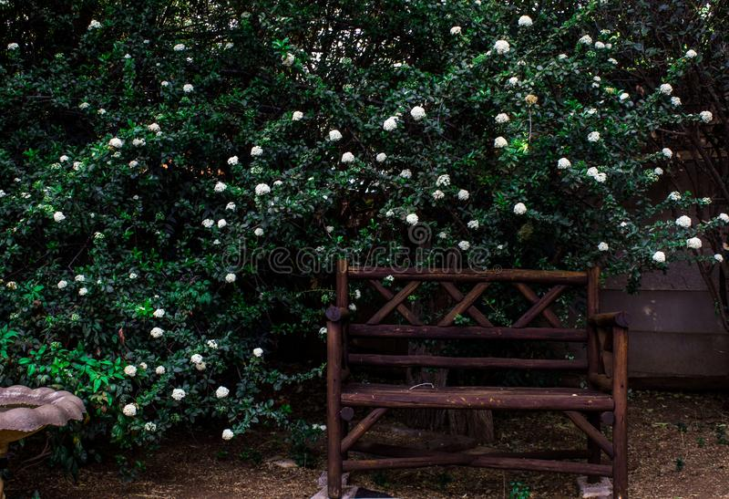 在庭院前面的长凳在南非 免版税库存照片