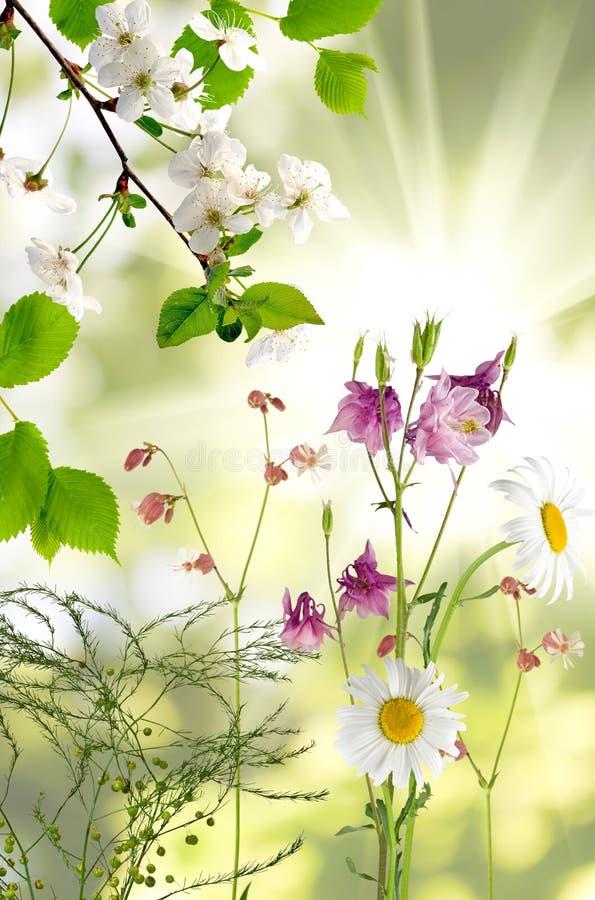在庭院特写镜头的白色美丽的花 库存照片