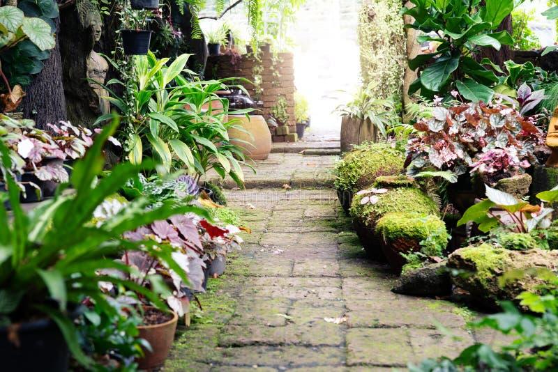 在庭院生气勃勃的走道道路在庭院里 免版税库存照片