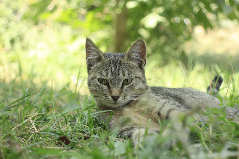 在庭院的猫 库存照片