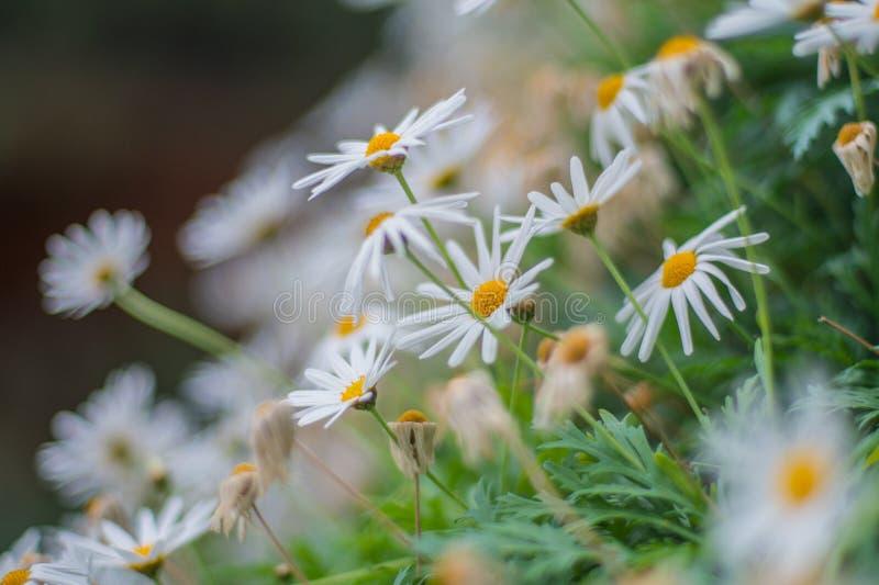 在庭院的花由海湾新加坡 免版税库存图片