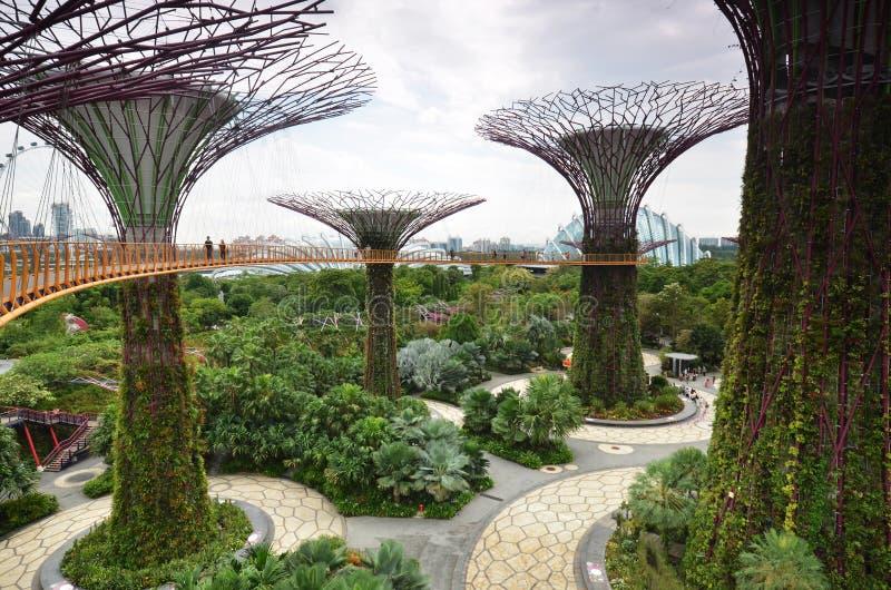 在庭院的Supertree凹线由海湾在新加坡 库存图片