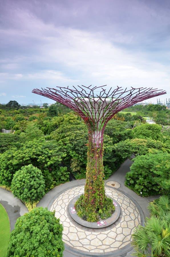 在庭院的Supertree凹线由海湾在新加坡 免版税库存照片