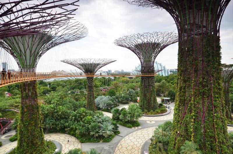 在庭院的Supertree凹线由海湾在新加坡 图库摄影