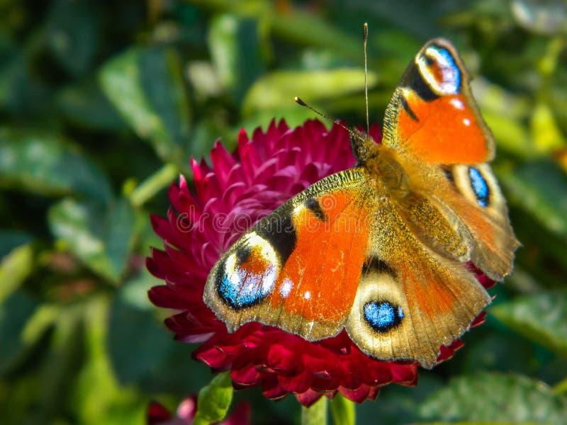 在庭院花的蝴蝶 库存照片