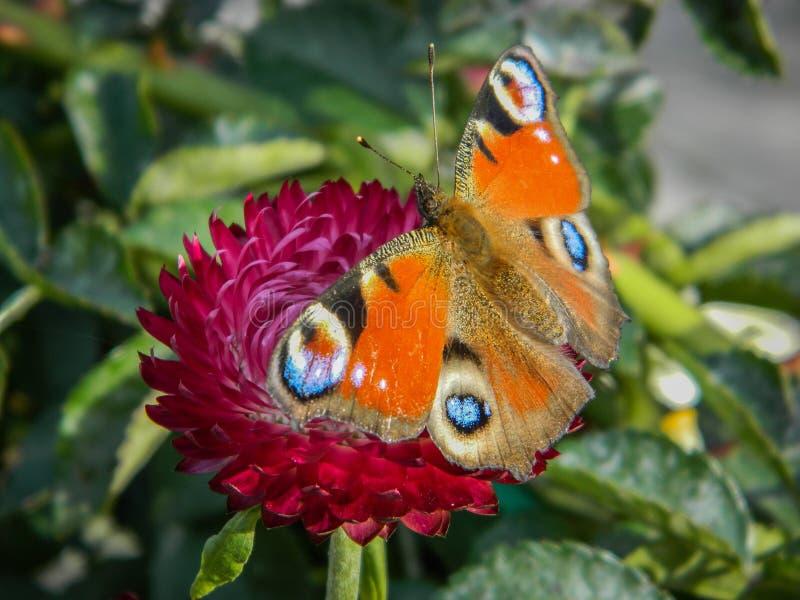 在庭院花的蝴蝶 免版税库存照片