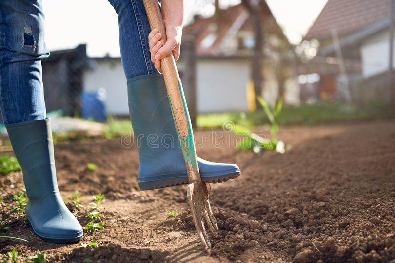 在庭院里工作-与Spading的开掘的春天土壤分叉 库存照片