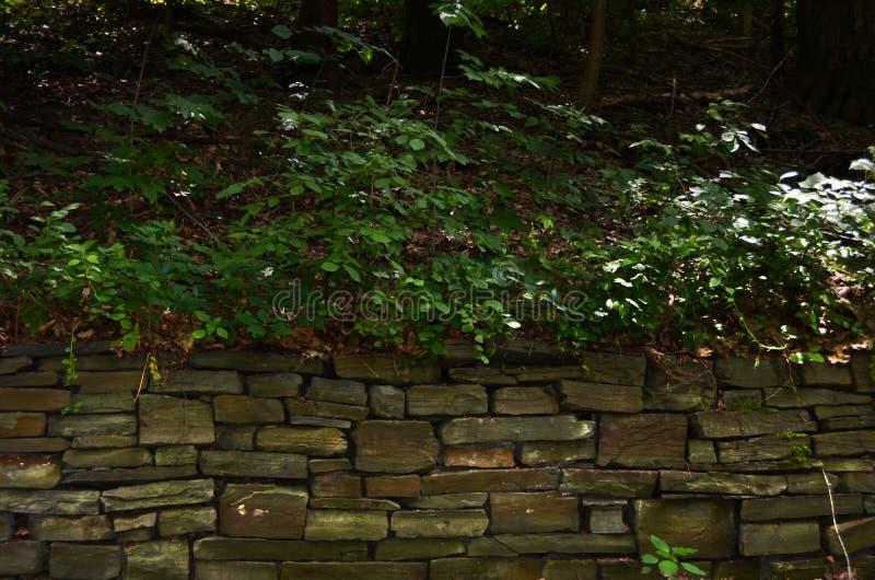 在康奈尔植物园烘干堆石墙 库存图片