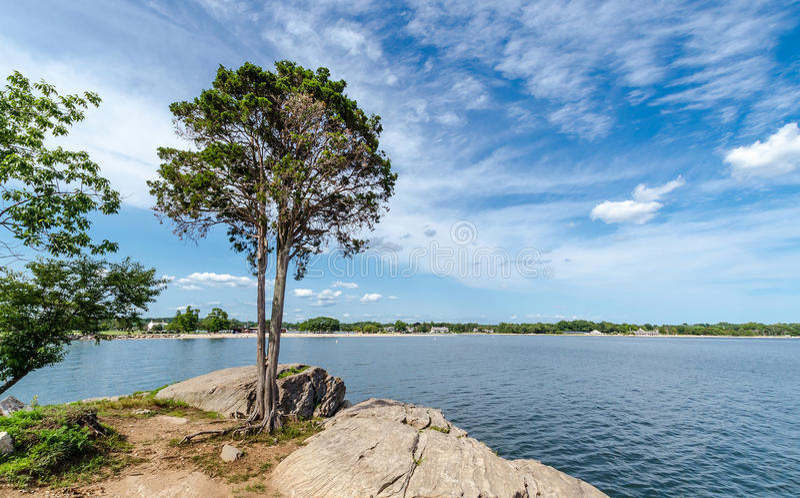 在康涅狄格海岸的树  免版税库存图片