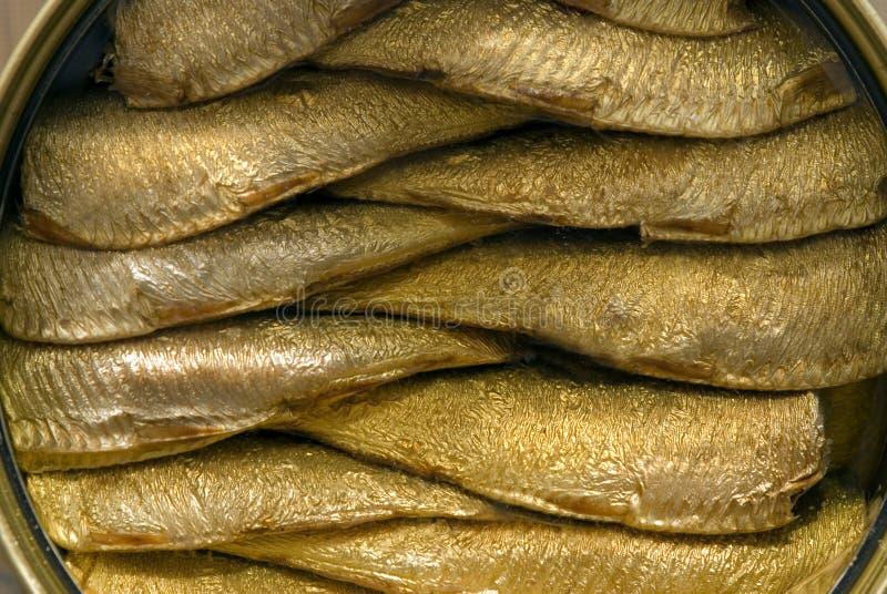 在开放锡的西鲱 免版税库存照片