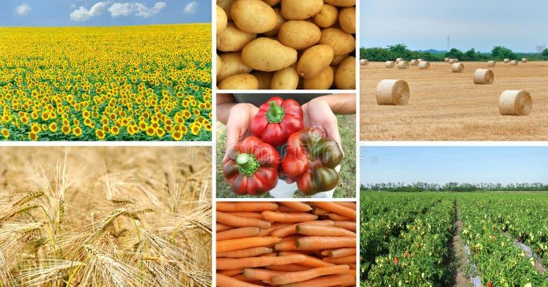 在开放领域的农业生产 免版税图库摄影