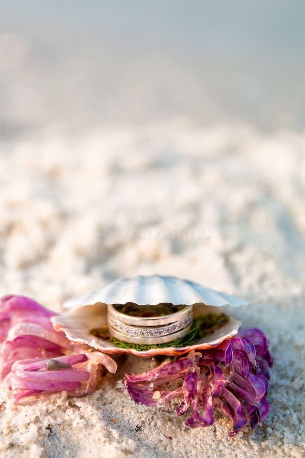 在开放贝壳的定婚戒指在海洋海滩 复制空间 框架 库存图片