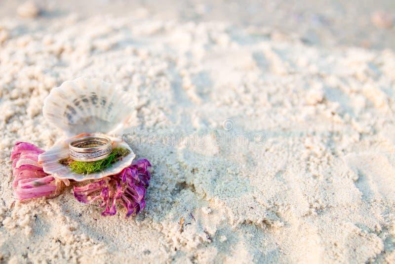 在开放贝壳的定婚戒指在海洋海滩 复制空间 框架 库存照片