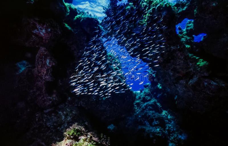 在开放洞的水下的珊瑚礁 图库摄影