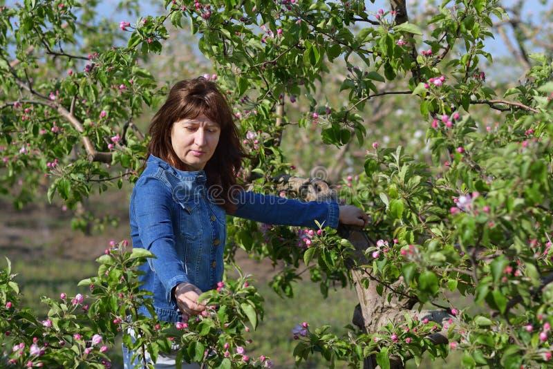 在开花的苹果树附近的妇女 免版税库存照片