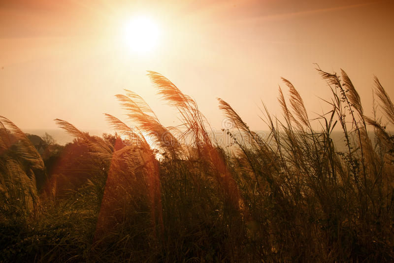 在开花的草后的日落 库存照片