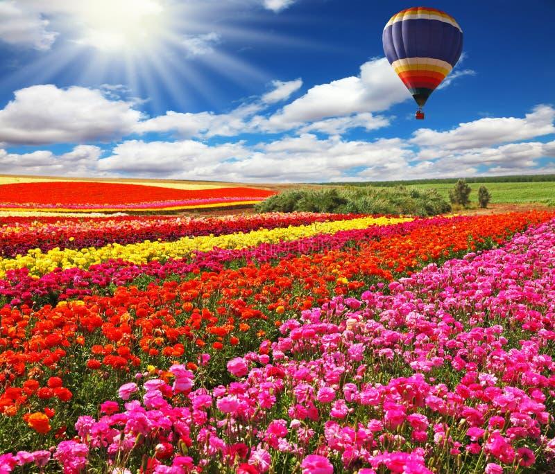在开花的领域的大气球 免版税图库摄影