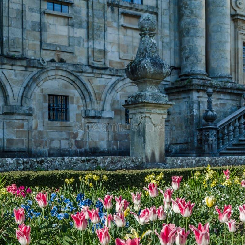 在开花,春天背景的五颜六色的花 免版税库存照片