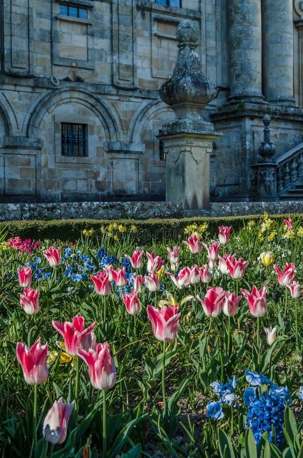 在开花,春天背景的五颜六色的花 库存图片