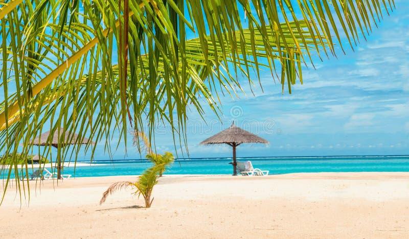 在异乎寻常的沙滩的棕榈树和棕榈树伞 图库摄影