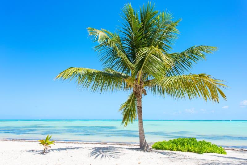 在异乎寻常的热带海滩的唯一棕榈树 图库摄影