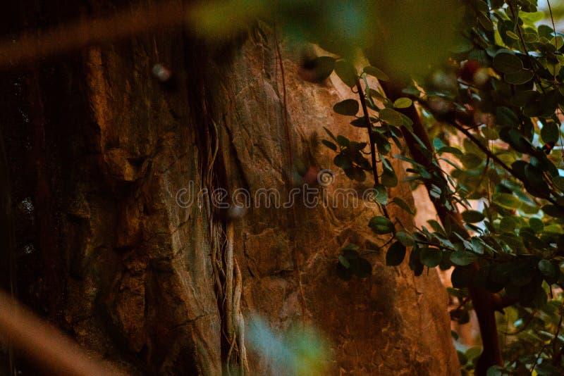 在弗雷德里克Meijer庭院晃动瀑布的面孔自热带温室在大瀑布城密执安 图库摄影