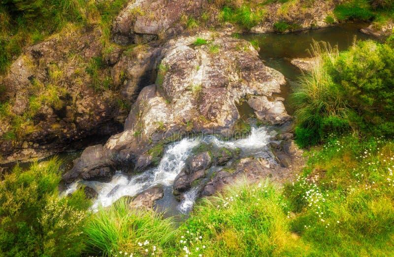 在当地灌木的小瀑布 库存图片