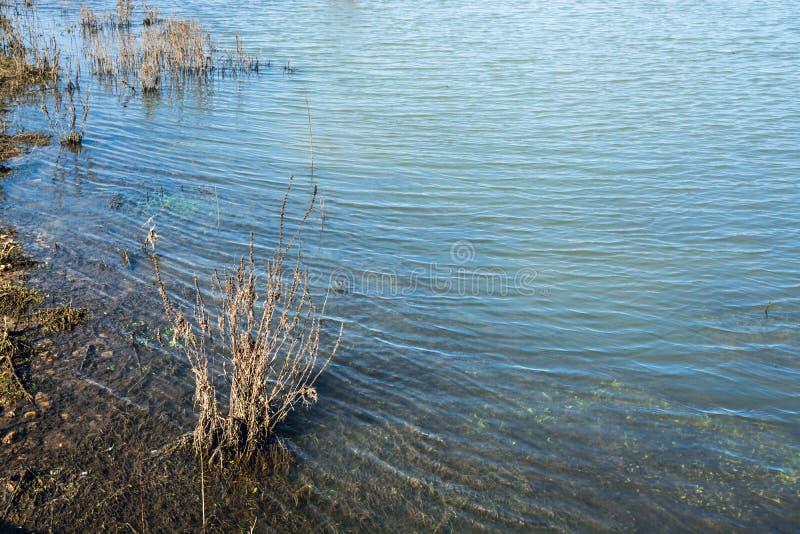 在形成微妙的波浪的浅湖浇灌由风- 1 库存图片