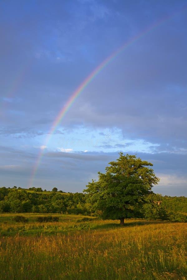 在彩虹结构树的auvergne横向 免版税库存图片