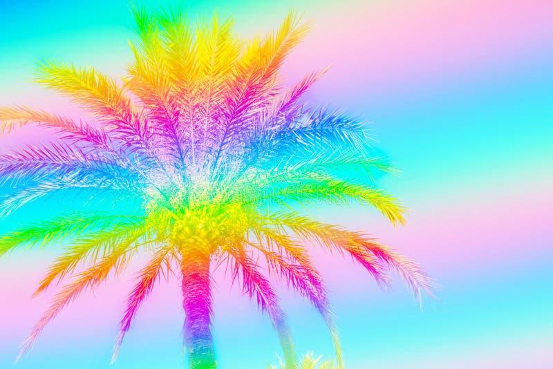 在彩虹霓虹颜色定调子的天空背景的羽毛似棕榈树 超现实主义的质朴的样式 复制文本的空间 使假期靠岸 向量例证