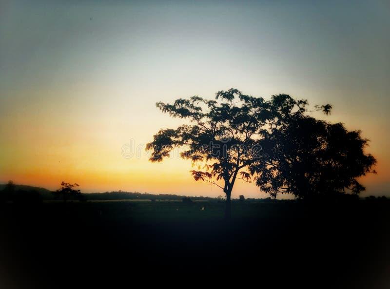 在影子的结构树 库存图片