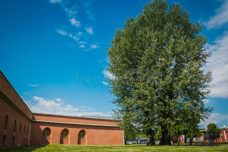 在彼得保罗大教堂的门前面的大树 库存图片