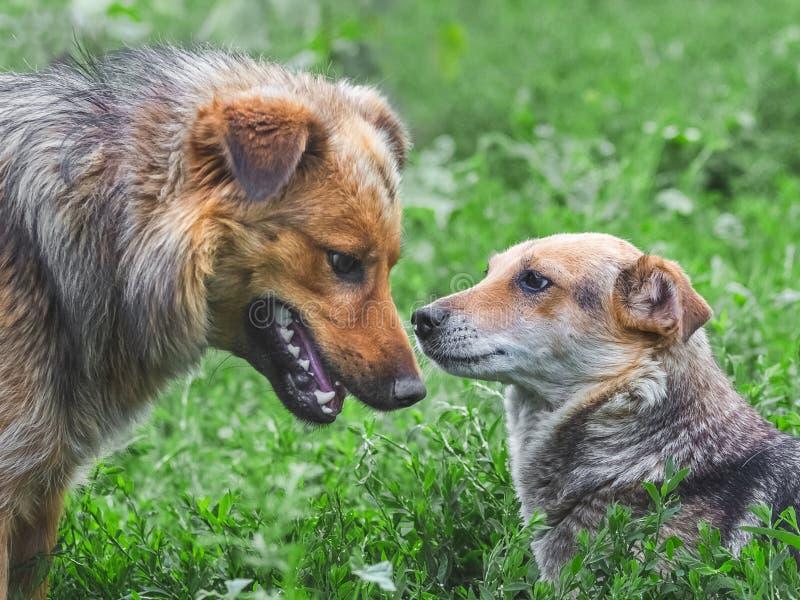 在彼此附近的两条狗 dogs_之间的友好的信任的关系 图库摄影