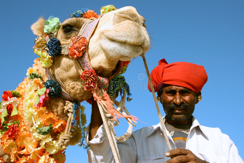 在徒步旅行队的骆驼 库存图片