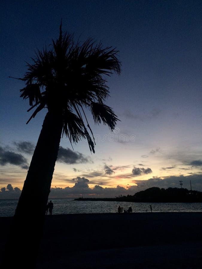 在微明的棕榈树剪影 免版税库存照片