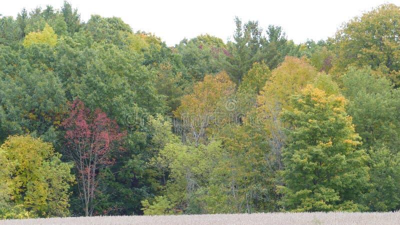 在微风的秋天树 免版税库存图片