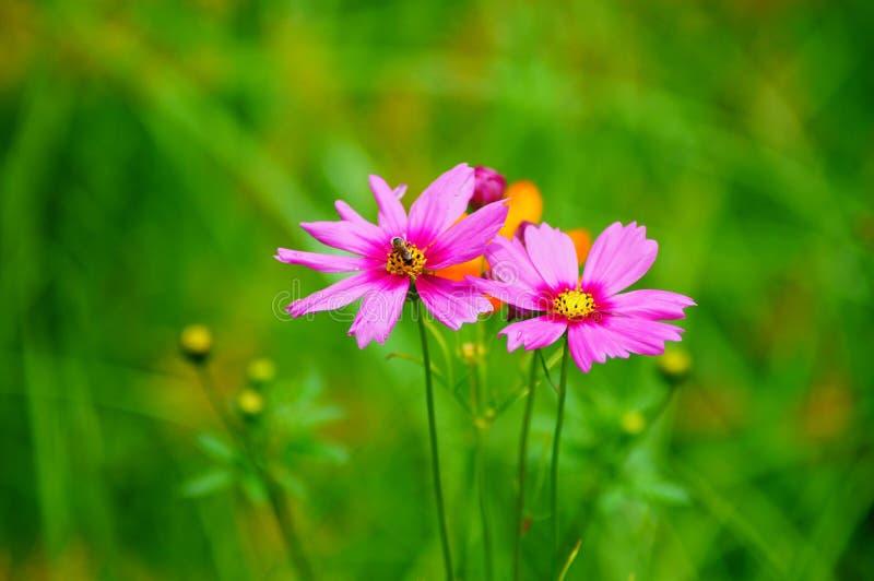 在微风的野花 库存照片