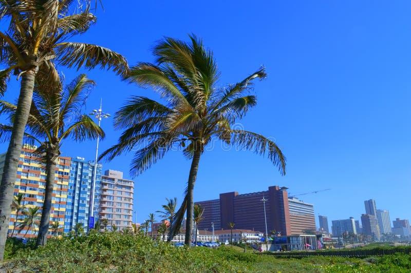 在德班海滨人行道,南非的棕榈树 免版税库存图片