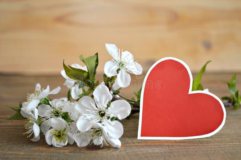 在心脏和春天的形状的空白的贺卡开花 图库摄影