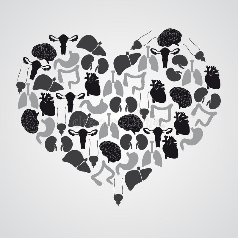 在心脏形状的内部人体器官 库存例证