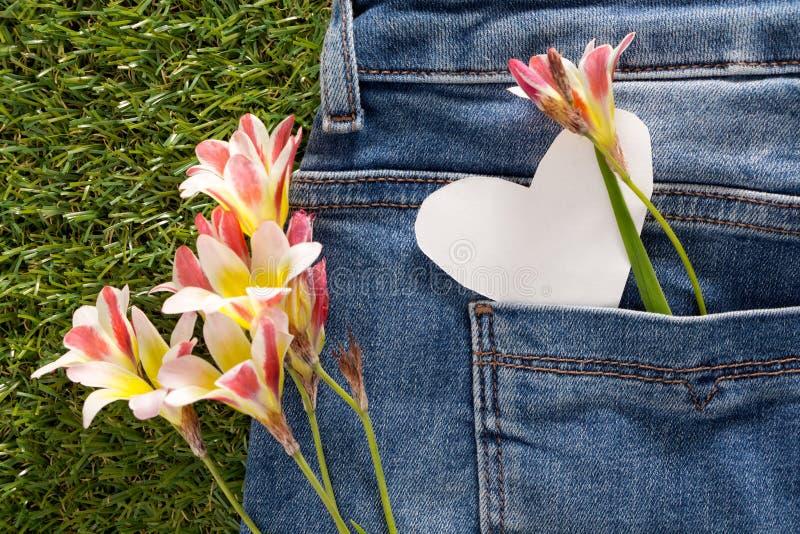 在心脏形状的空白的在蓝色牛仔裤的笔记与拷贝空间的和花支持口袋 免版税库存照片